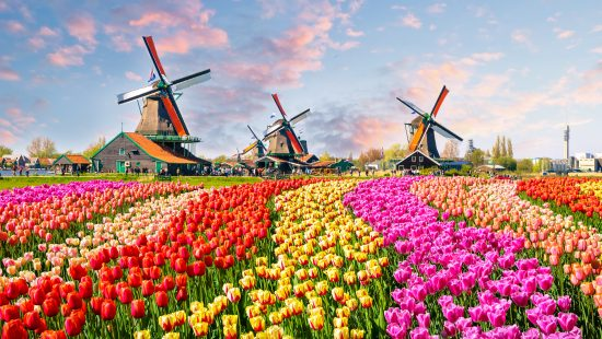Windmills and tulips in the Keukenhof Gardens in the Netherlands