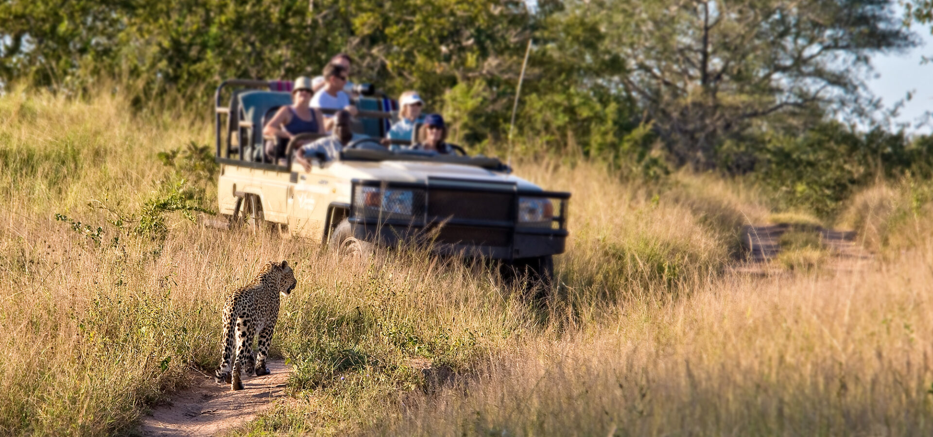 People on a game drive enjoying the view